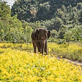 GillesChevillon-elephant-3