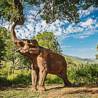 GillesChevillon-elephant