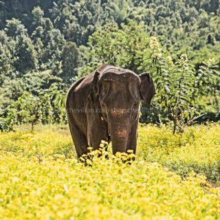 GillesChevillon-elephant-4