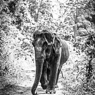 GillesChevillon-elephant-5