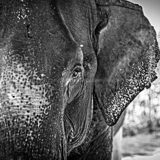 GillesChevillon-elephant-6