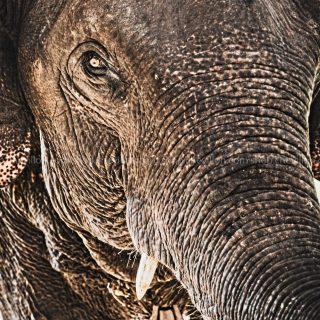GillesChevillon-elephant-7