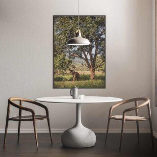 cadre-GillesChevillon-elephant-2