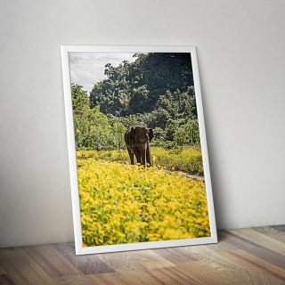 cadre-GillesChevillon-elephant-3