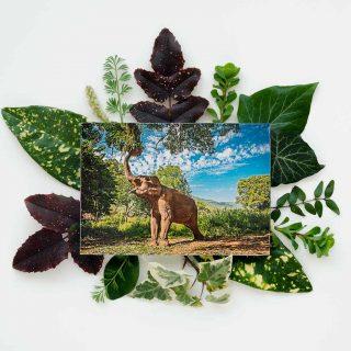 cadre-GillesChevillon-elephant