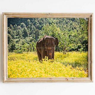 cadre-GillesChevillon-elephant-4