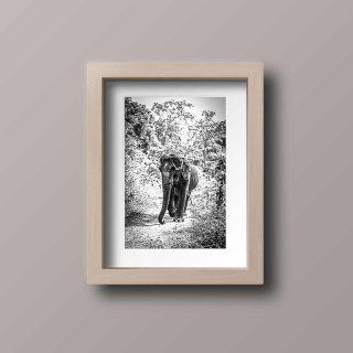 cadre-GillesChevillon-elephant-5