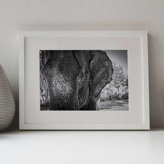 cadre-GillesChevillon-elephant-6